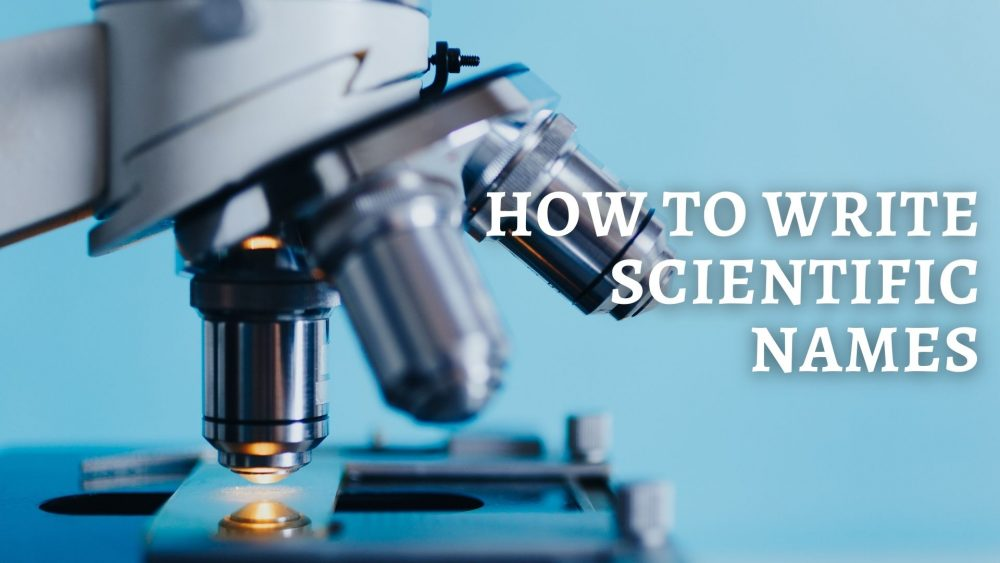How to Write Scientific Names